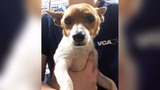 44 dogs rescued from La. flooding by Atlanta Humane Society