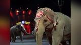 Ringling Bros. circus elephants set for final act Sunday